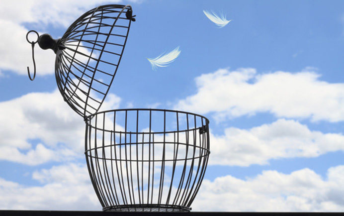 Stevan Noronha - Freedom Blog